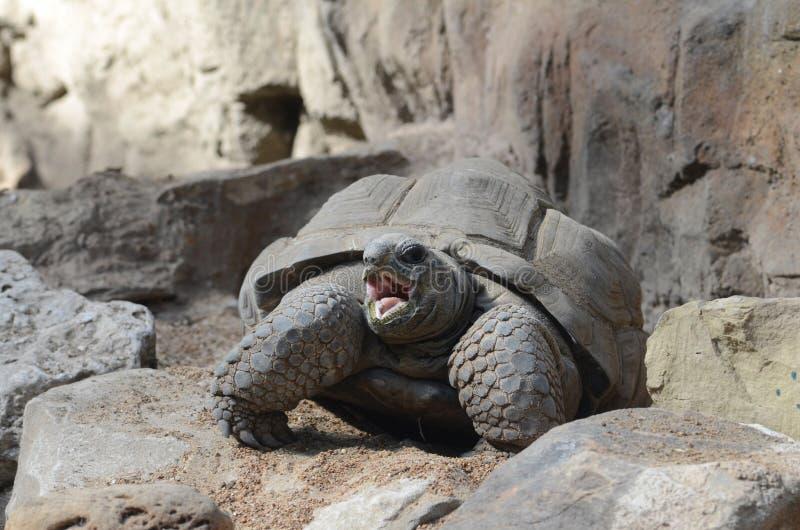 放热的tortoise3 库存图片