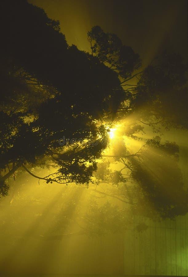 放热街道的有雾的轻的晚上 免版税库存照片
