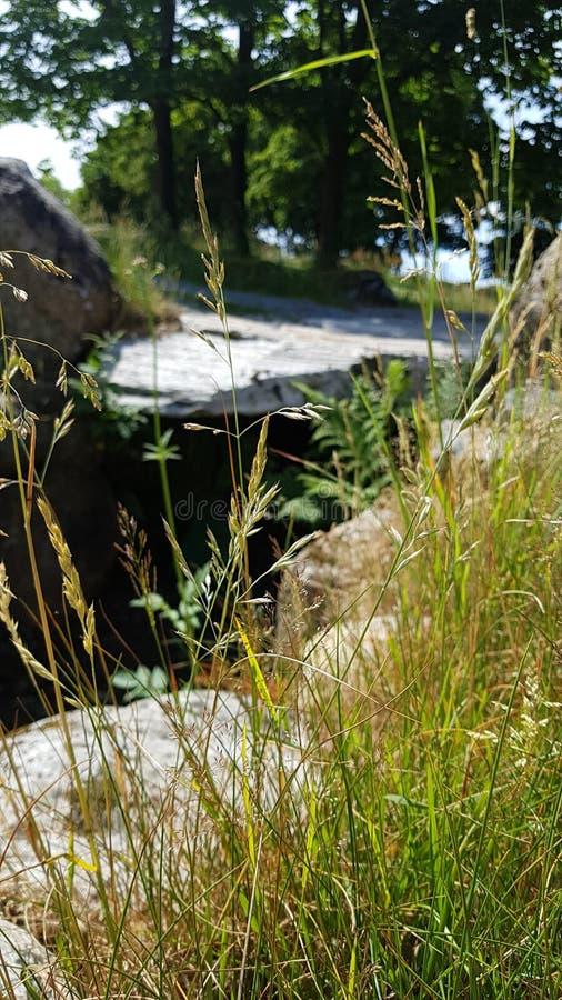 放牧与好的石头的秸杆在背景中 库存图片