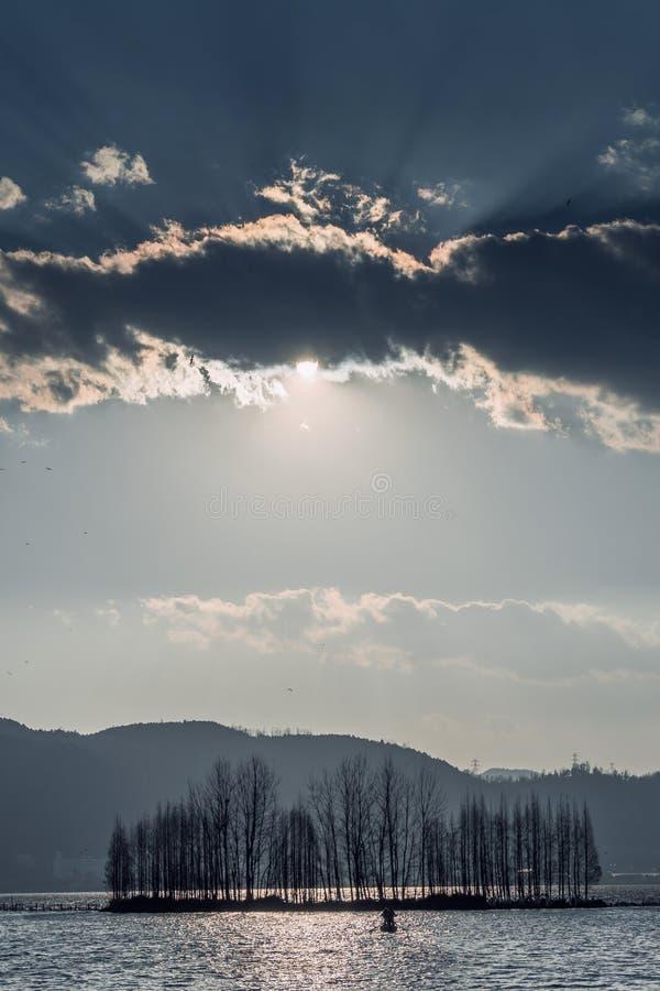 放牧和生长在有日落的沼泽地的仓促 免版税库存图片