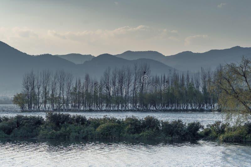 放牧和生长在有日落的沼泽地的仓促 图库摄影