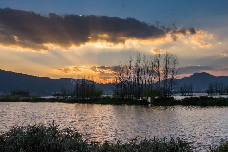 放牧和生长在有日落的沼泽地的仓促 库存照片