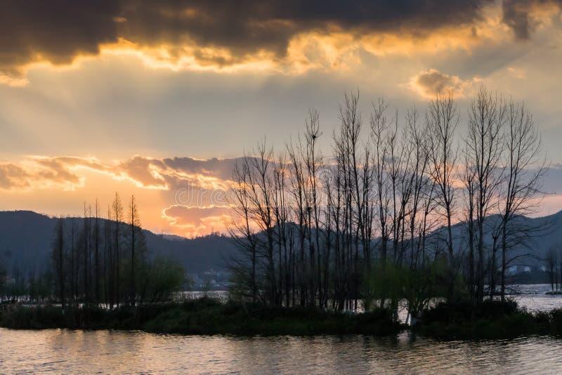 放牧和生长在有日落的沼泽地的仓促 免版税库存照片