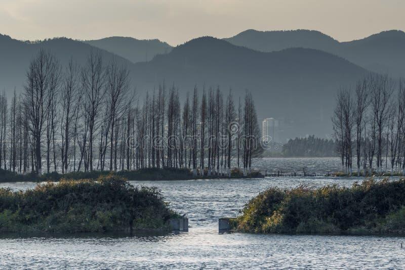 放牧和生长在有日落的沼泽地的仓促 库存图片