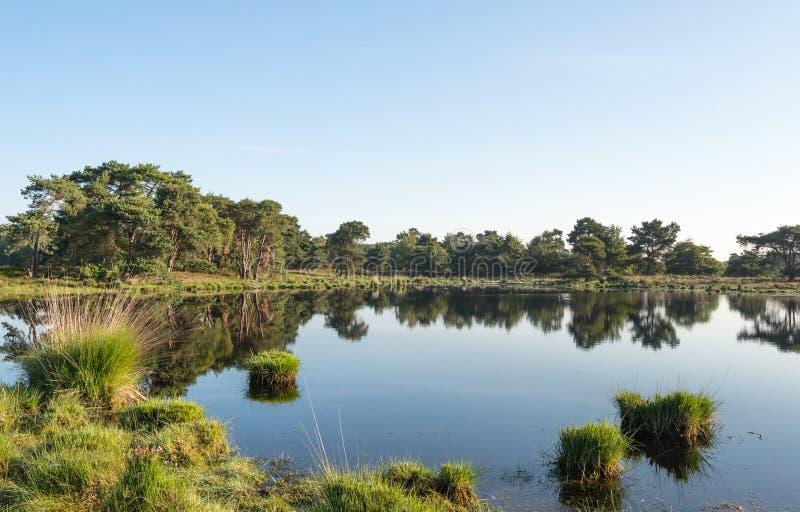 放牧在镜子光滑的水表面的丛 库存照片