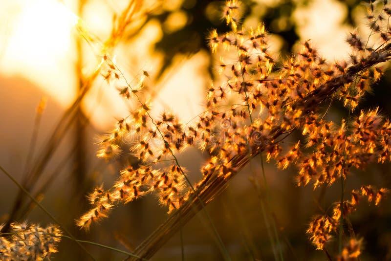 放牧花在与f的浅深度的阳光选择聚焦 免版税图库摄影