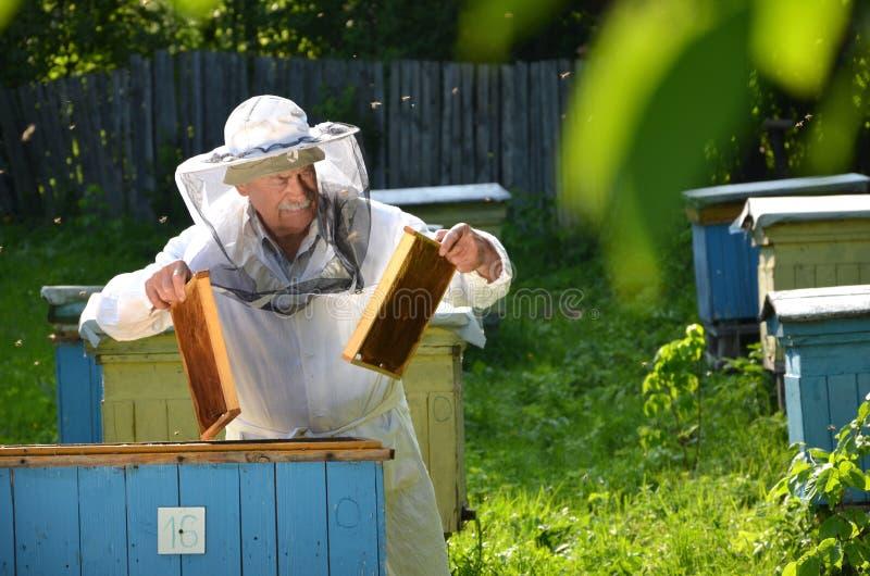 放空的蜂窝框架的老练的资深蜂农入在他的蜂房的一个蜂箱 免版税库存照片