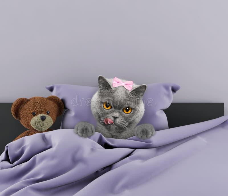 放置在与玩具的床上的猫 免版税图库摄影