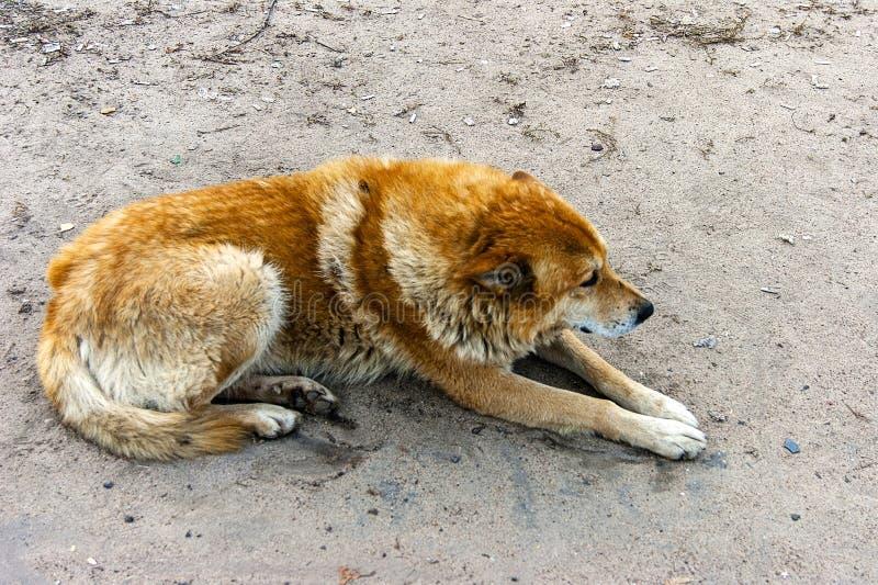 放置在地面上的孤独的狗 免版税图库摄影