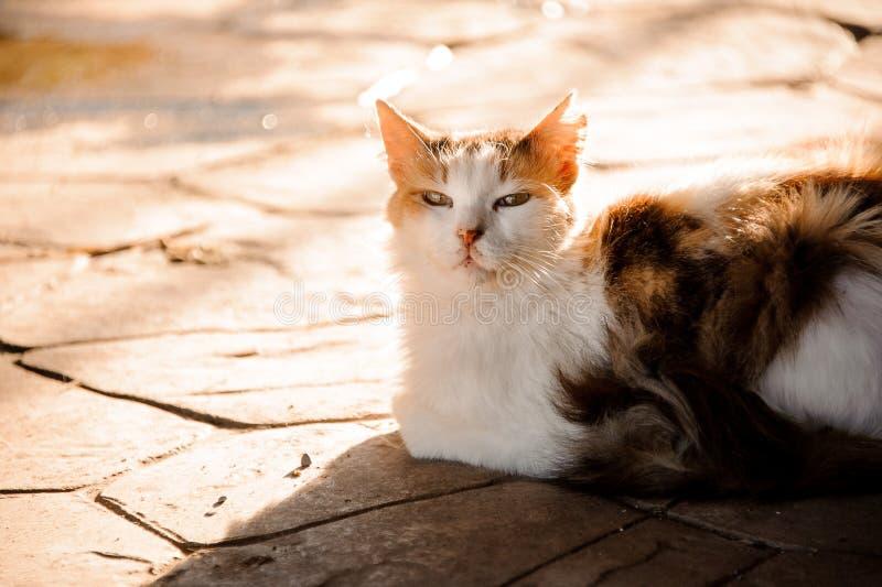 放置在地面上的猫的画象 库存照片