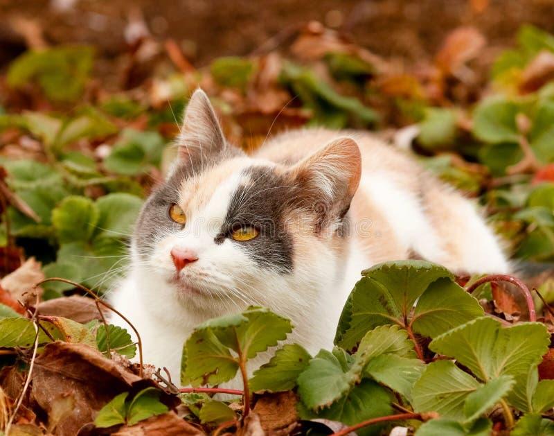 放置在地面上的绿色草莓叶子的逗人喜爱的五颜六色的猫 猫眼黄色 免版税库存照片
