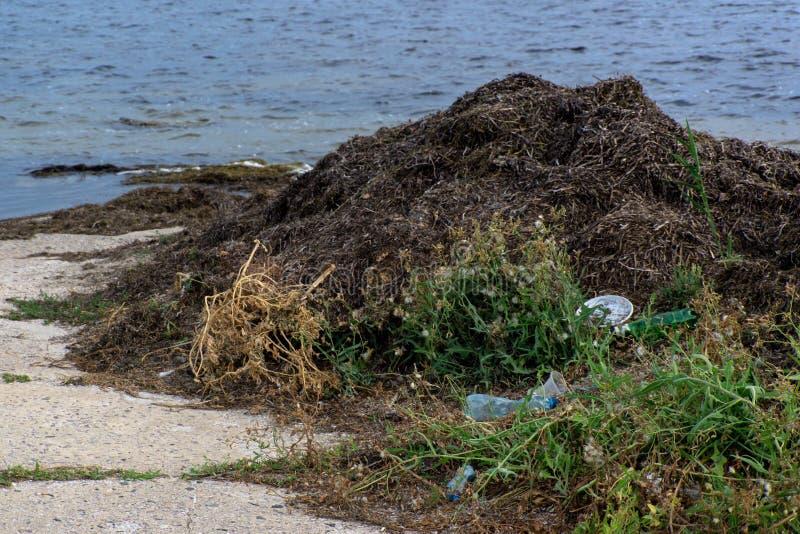 放置在海滩的塑料瓶和塑料废物特写镜头围拢由海草 免版税图库摄影