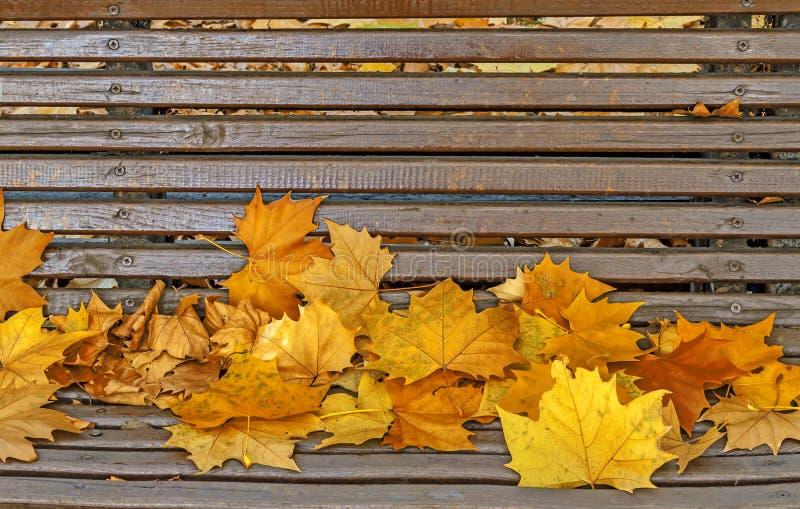 放置在长凳的黄色秋叶在公园 库存照片