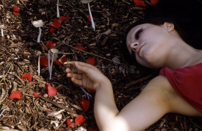 放置妇女的森林 库存图片