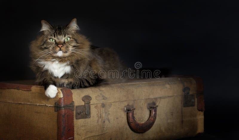 放置葡萄酒手提箱的猫 免版税库存图片