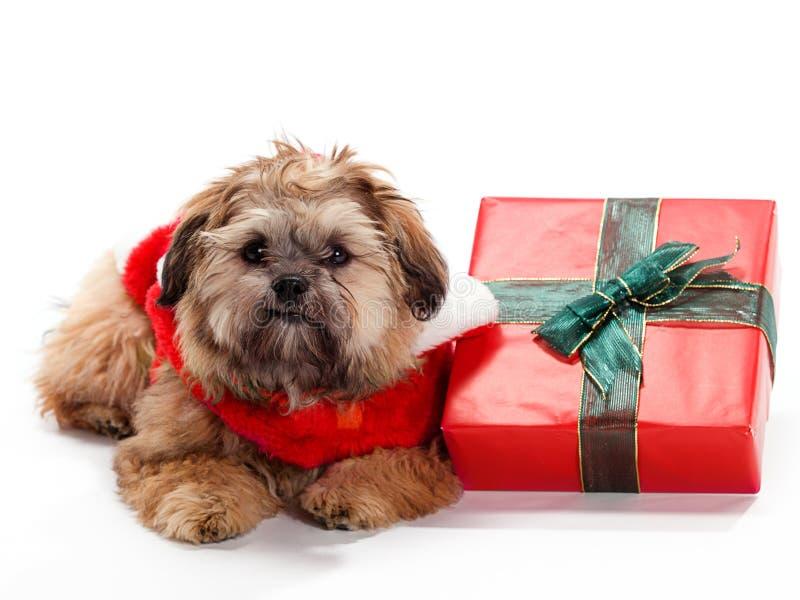 放置poo shi的圣诞节 免版税图库摄影