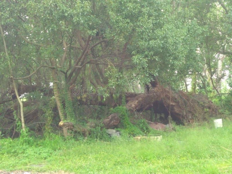 故障划分为的森林风暴结构树 库存照片