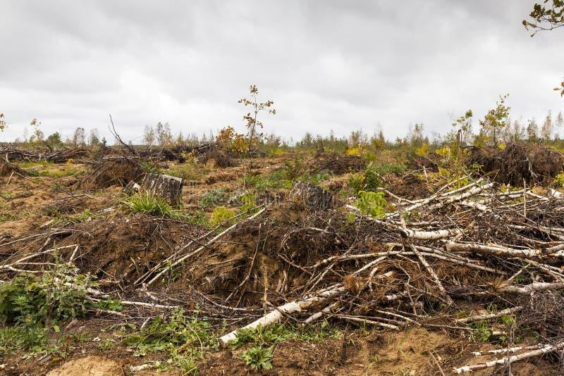 故障划分为的森林风暴结构树 树在风暴以后的森林里 库存图片