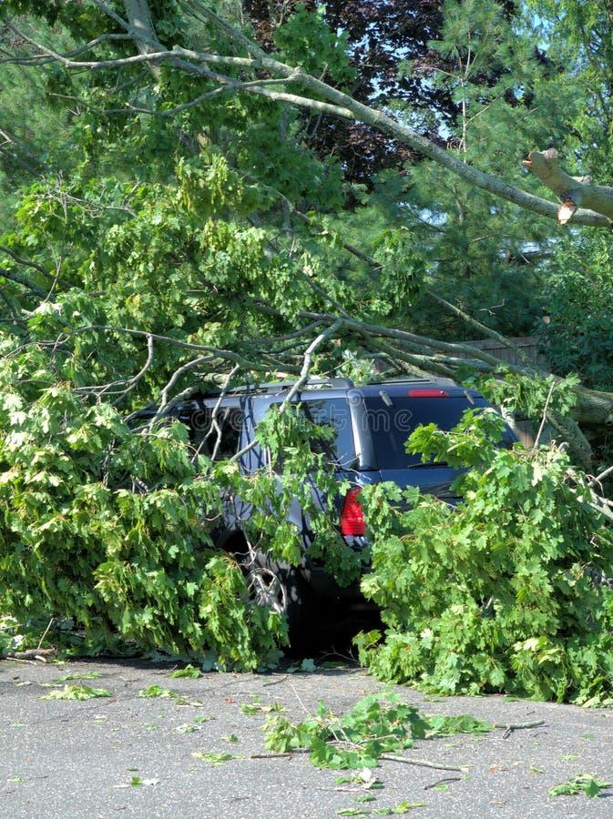 故障划分为的森林风暴结构树 库存图片