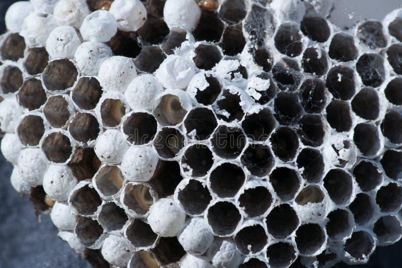 救生服-黄蜂蜂房 免版税图库摄影