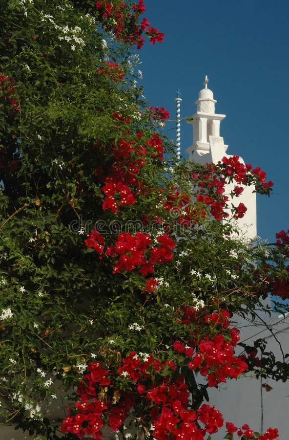 教会开花的希腊结构树 免版税库存图片