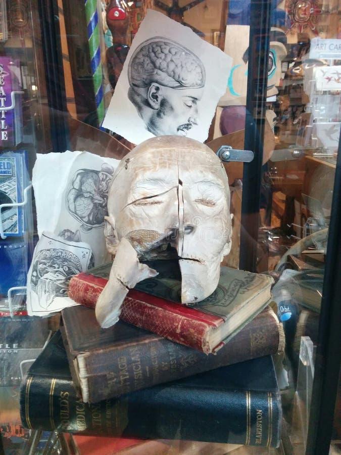 教育的医疗爱德真正的人头在Ye Olde求知欲商店 免版税库存照片
