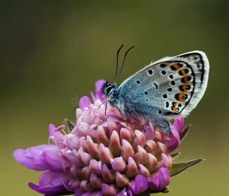 散布的蓝色蝶粉花紫色银 免版税库存图片