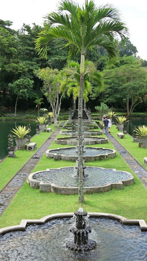 散步在热带庭院里 有棕榈和许多五颜六色的花的热带庭院 库存图片