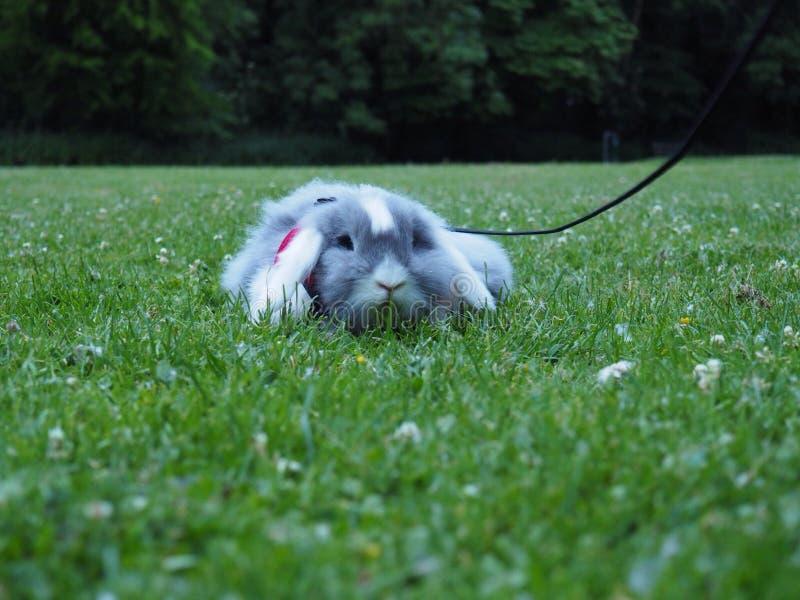 去散步的兔宝宝 库存图片