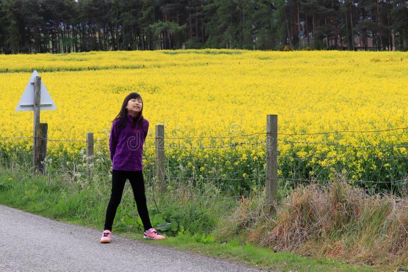 敬佩油菜领域风景的女孩 免版税图库摄影