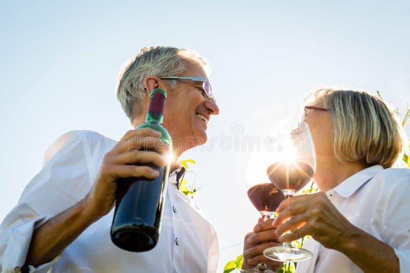 敬酒与酒杯的资深夫妇在葡萄园里 图库摄影