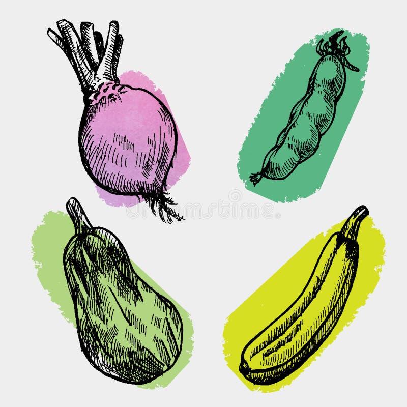数字式传染媒介详细的颜色圆白菜 皇族释放例证