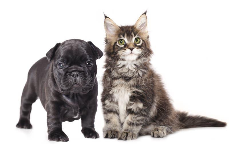数字式小猫小狗草图 图库摄影