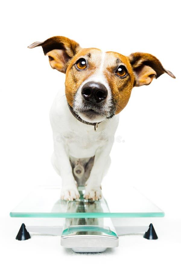 数字式狗缩放比例 库存照片