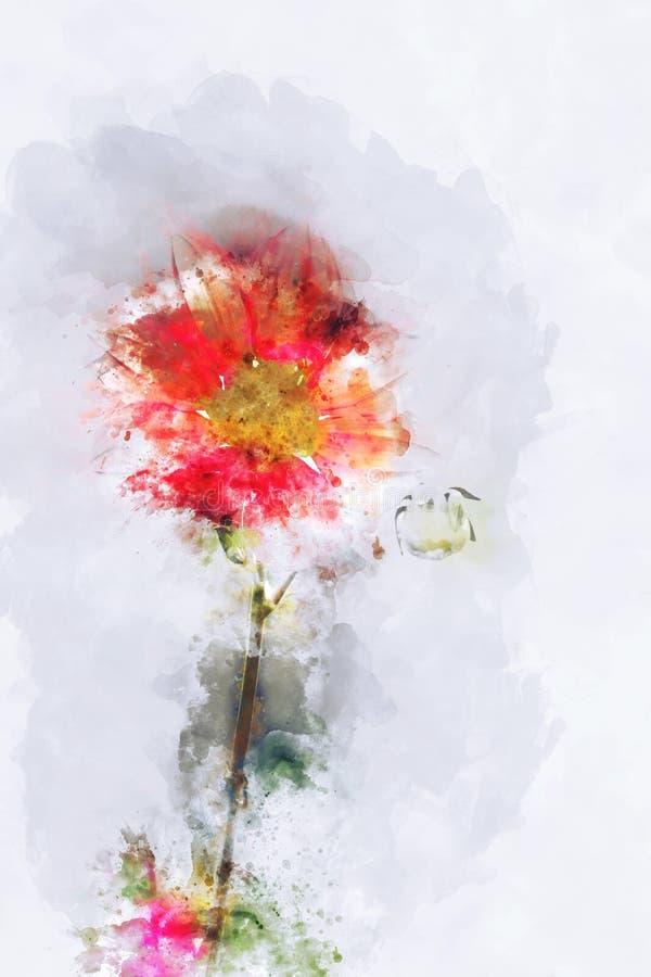 数字红色波斯菊花水彩绘画  皇族释放例证