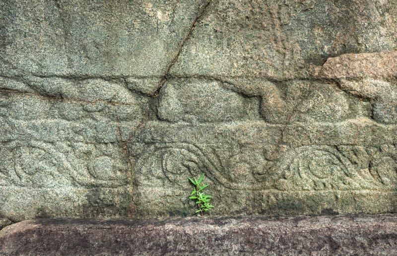 敲在一个古庙的石工外面的绿色植物的新芽在亚洲 在自然lanscape的老石结构 免版税库存照片