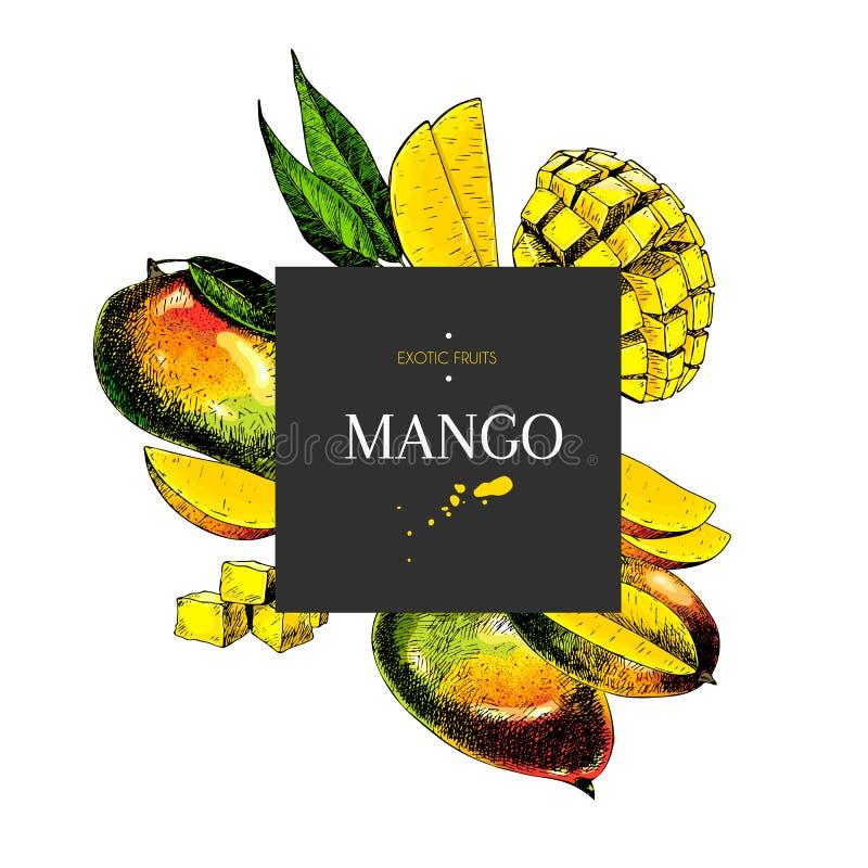 整个手拉的芒果,切,与叶子的立方体在设计模板 色的被刻记的例证 方形的时髦的框架 库存例证