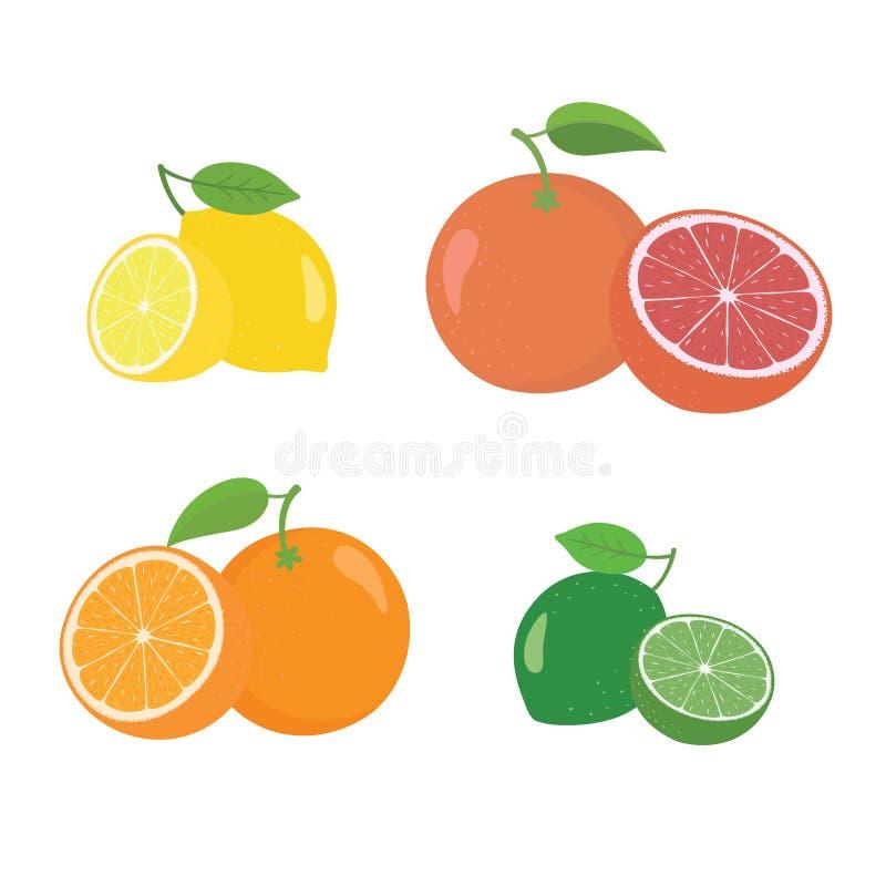 整个新鲜的柑橘水果和一半4个象摆正与橙色葡萄柚柠檬lyme 皇族释放例证
