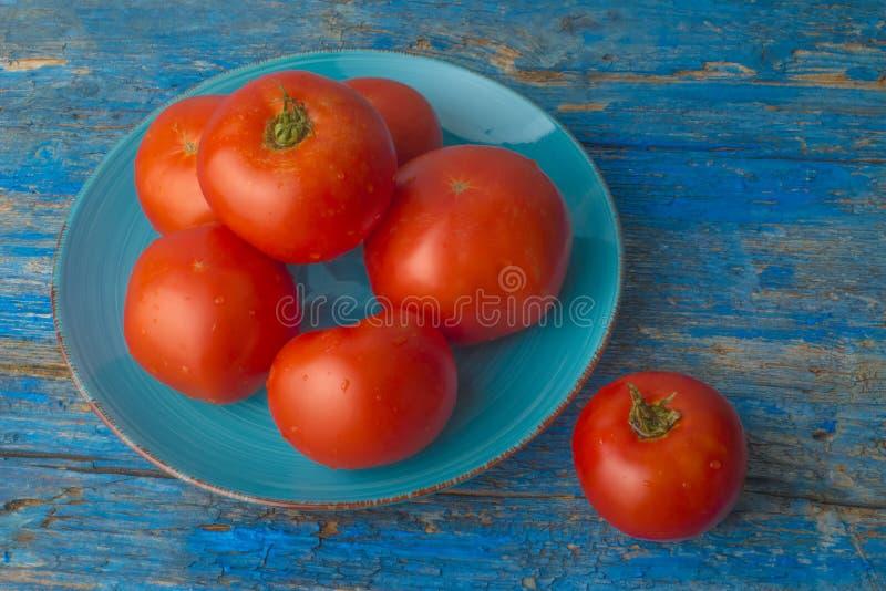 整个自然蕃茄有机耕田 免版税库存照片