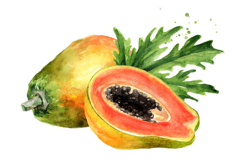 整体和一半与绿色叶子的甜成熟番木瓜果子 r 水彩手拉的例证,被隔绝 向量例证