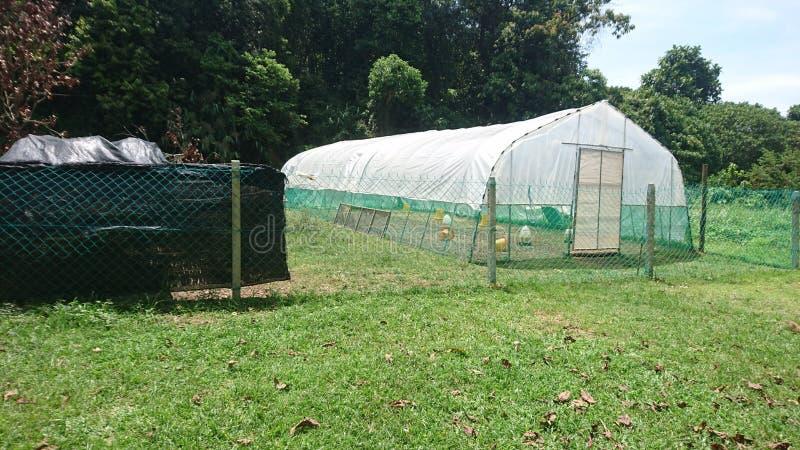整体简单的鸡帐篷 免版税库存图片