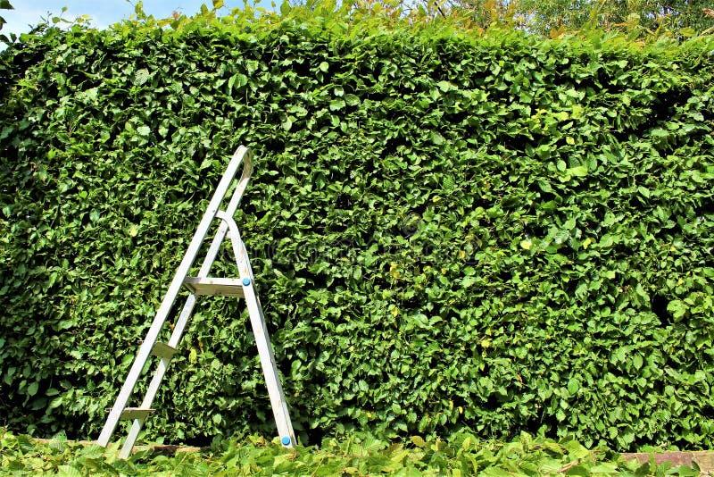 整理树篱的图象,从事园艺 库存照片