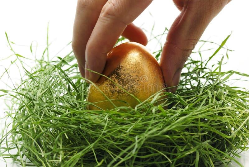 整理蛋的金子 免版税库存照片