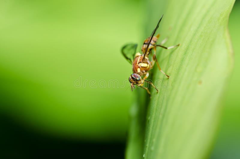 Download 文件花果子绿色本质 库存图片. 图片 包括有 宏指令, 动物学, 飞行, beautifuler, 昆虫 - 22356285