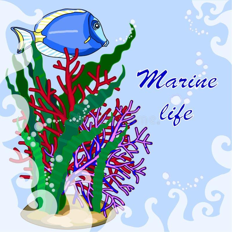 文本海题材、鱼和海藻的框架从珊瑚 免版税库存照片