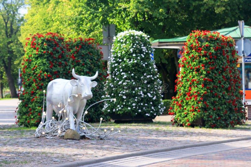 文茨皮尔斯,拉脱维亚- August 12日2018年:在的许多母牛之一 库存照片