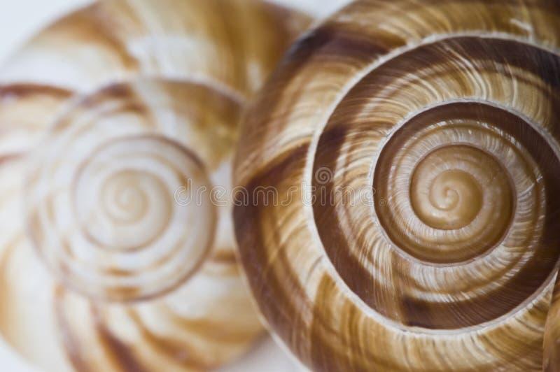 斐波那奇的螺旋 库存照片