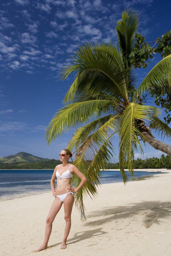 斐济和平的南热带假期 免版税图库摄影