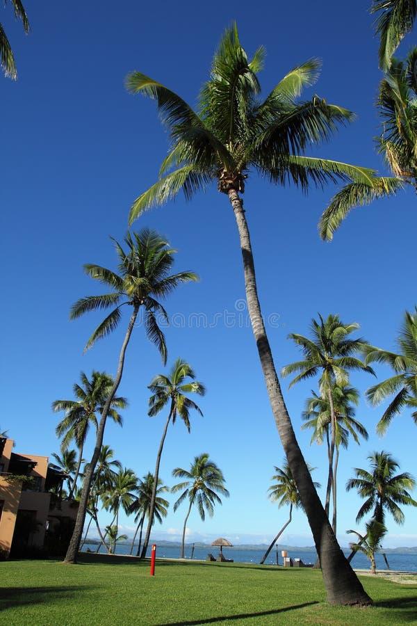 斐济手段 库存图片