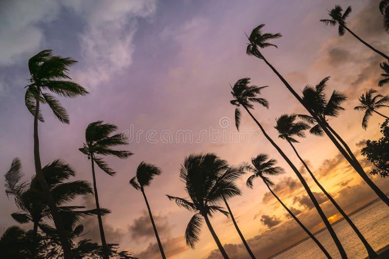 斐济日落视图 免版税库存图片